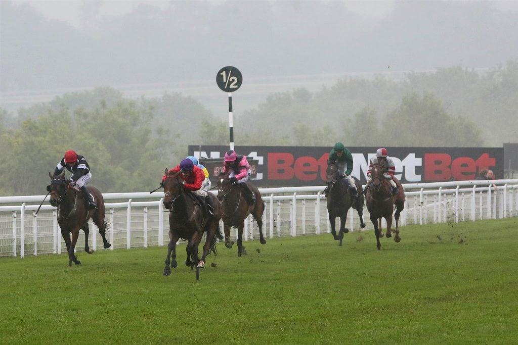 Horses running in front of NetBet logo