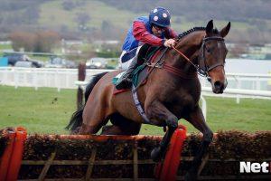 Paisley Park vs Thyme Hill best horse racing odds Cheltenham